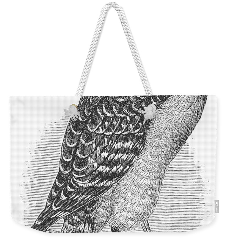 1890 Weekender Tote Bag featuring the photograph Red-shouldered Hawk, 1890 by Granger