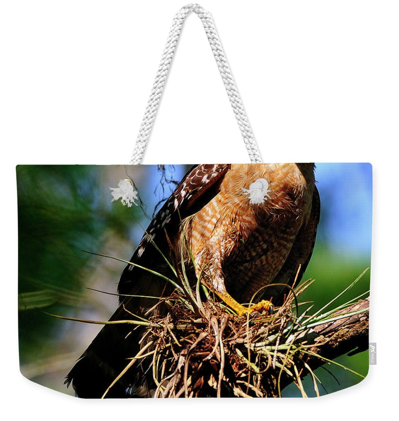 Red-shouldered Weekender Tote Bag featuring the photograph Red-shouldered Hawk by Bill Dodsworth