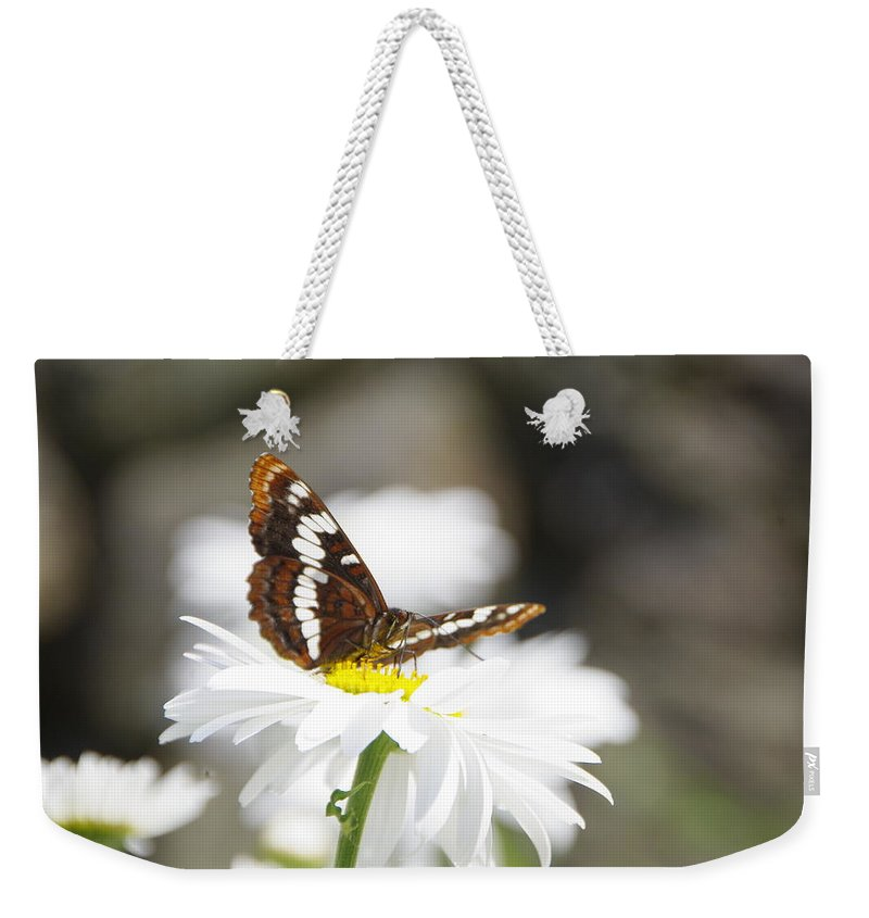 Butterfly Weekender Tote Bag featuring the photograph Resting Awhile by Marilyn Wilson