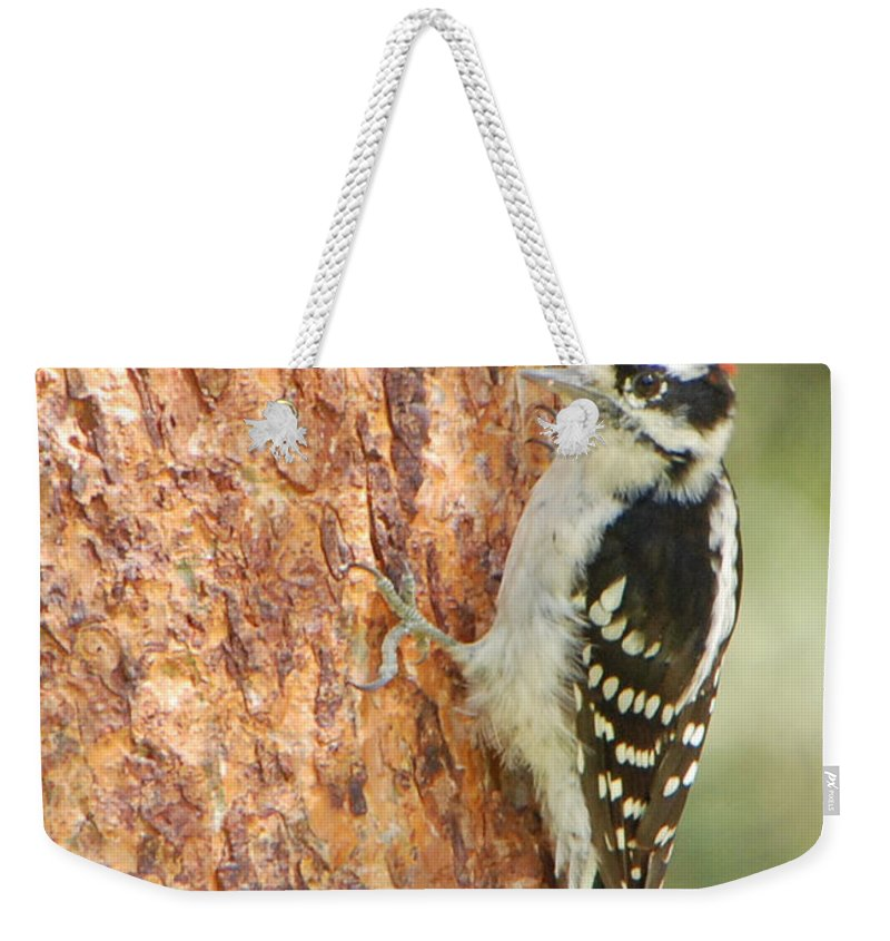 Birds Weekender Tote Bag featuring the photograph Resting by Grace Grogan