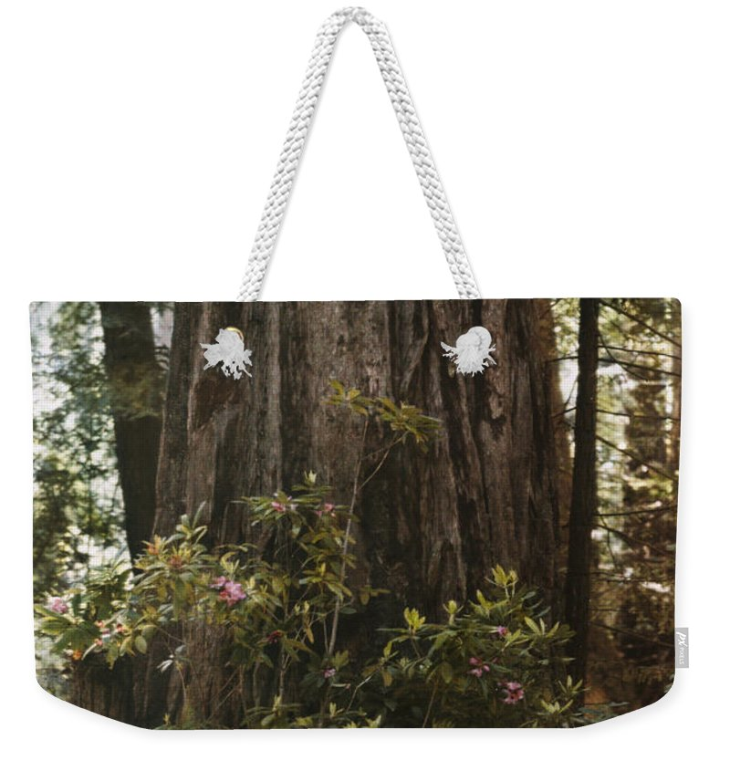 Day Weekender Tote Bag featuring the photograph Rhododendrons Bloom Around The Trunk by Charles Martin
