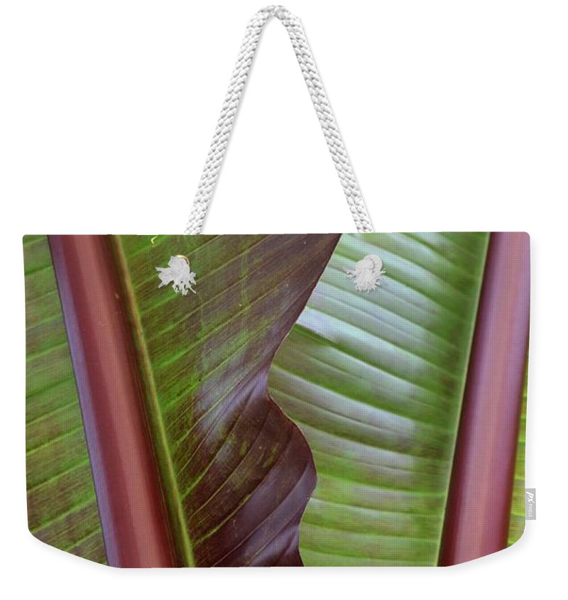 Ribbed Weekender Tote Bag featuring the photograph Ribbed by Maria Urso