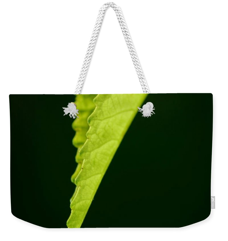 Leaf Weekender Tote Bag featuring the photograph Rigid by David Weeks