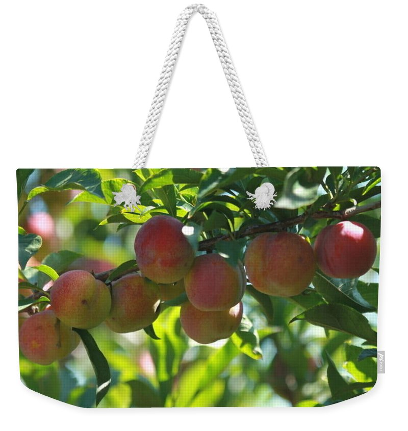 Agriculture Weekender Tote Bag featuring the photograph Ripe Fleshy Plums On The Branch by Jeelan Clark