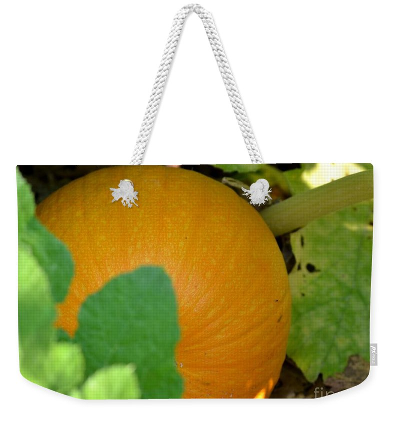 Ripe Weekender Tote Bag featuring the photograph Ripe On The Vine by Maria Urso