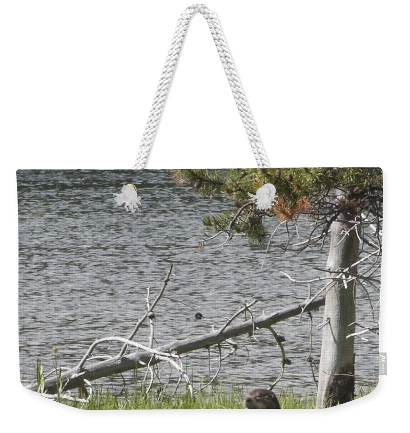 River Otter Weekender Tote Bag featuring the photograph River Otter by Belinda Greb