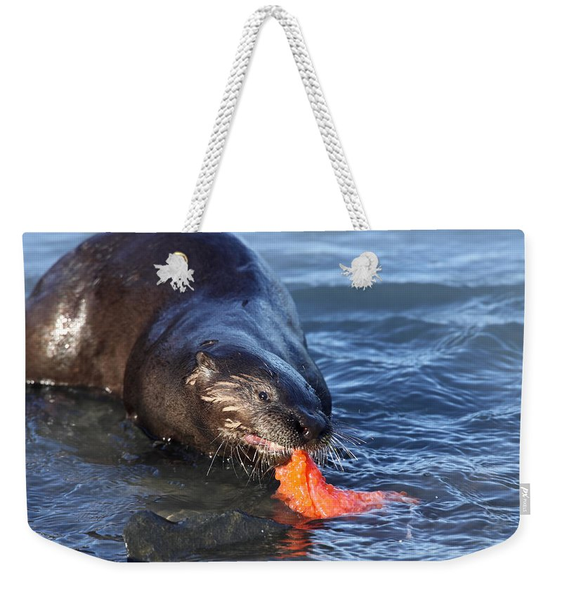 Doug Lloyd Weekender Tote Bag featuring the photograph River Otter by Doug Lloyd