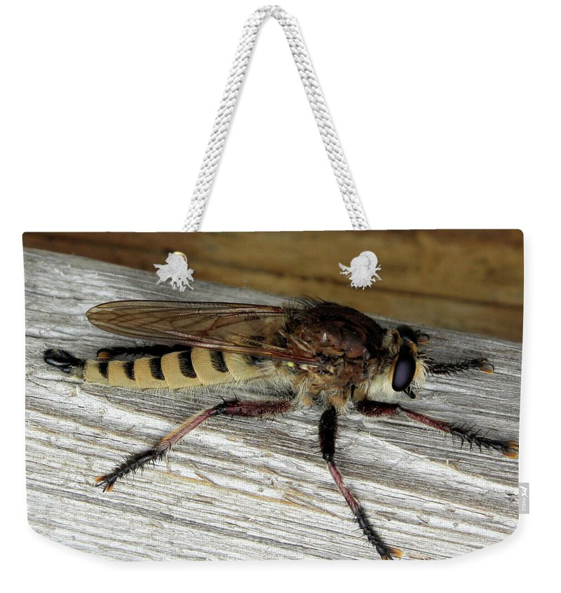 These Insects Look Scary Weekender Tote Bag featuring the photograph Robber Fly by Kristin Elmquist