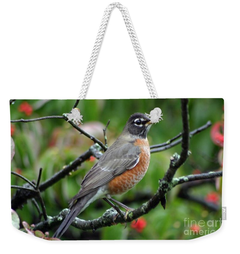 Birds Weekender Tote Bag featuring the photograph Robin by Living Color Photography Lorraine Lynch