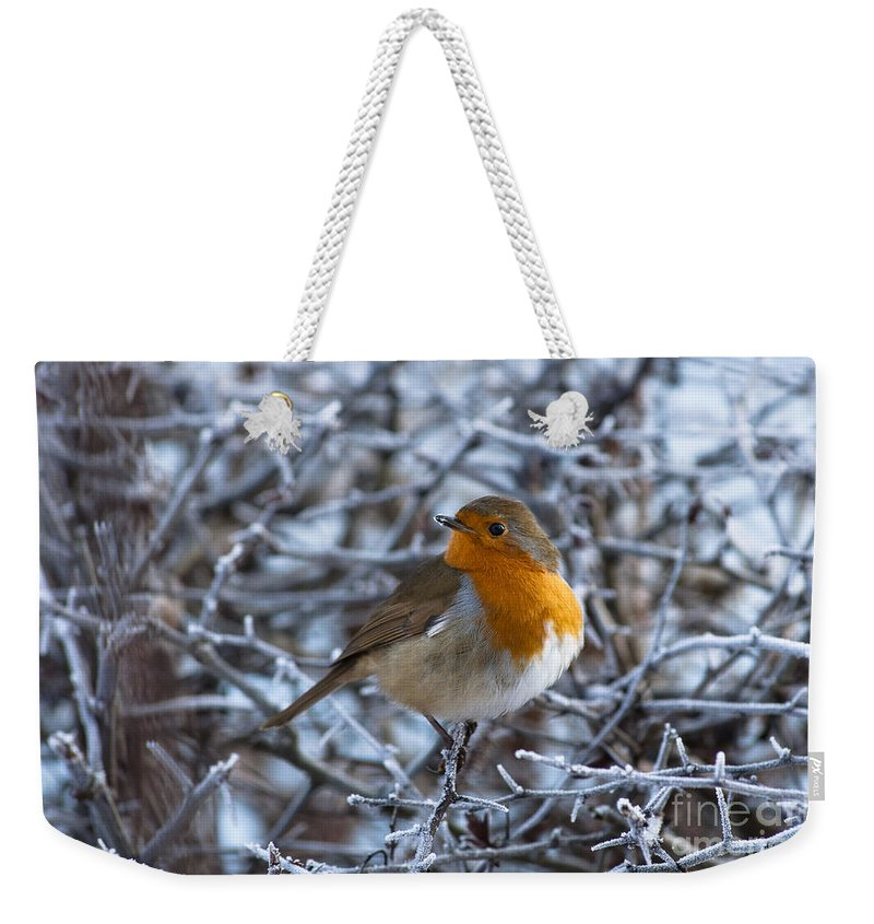 Britain Weekender Tote Bag featuring the photograph Robin On A Frosty Morning by Andrew Michael