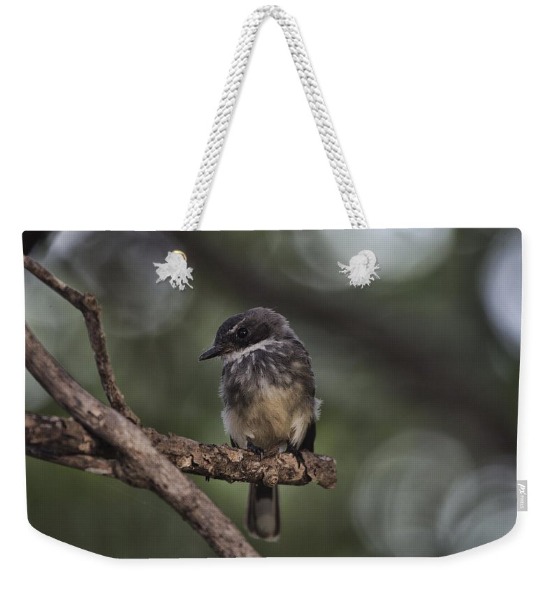 Robin Weekender Tote Bag featuring the photograph Robin Top-End Australia by Douglas Barnard