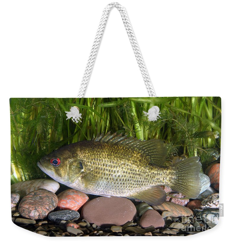 Animal Weekender Tote Bag featuring the photograph Rock Bass by Ted Kinsman