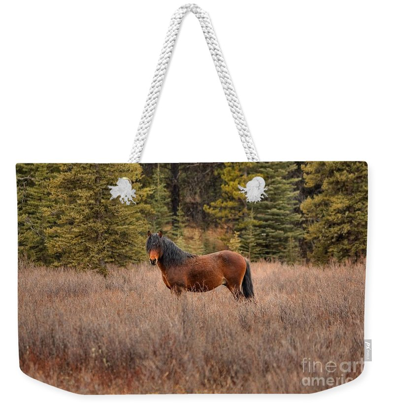 Bachelor Stallion Weekender Tote Bag featuring the photograph Rock Star by James Anderson