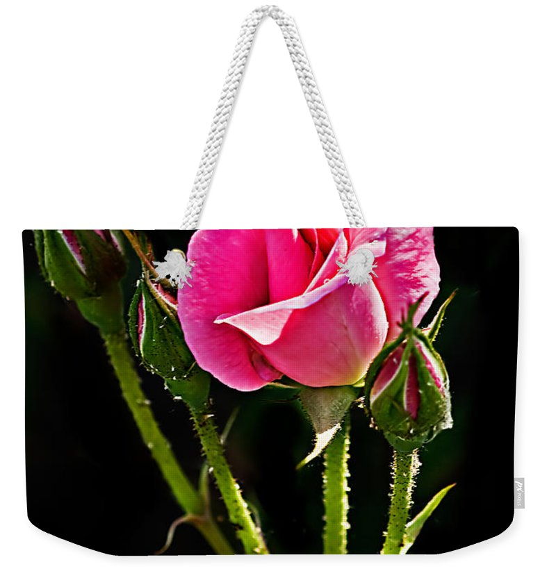 Rose Weekender Tote Bag featuring the photograph Rose And Buds by Robert Bales