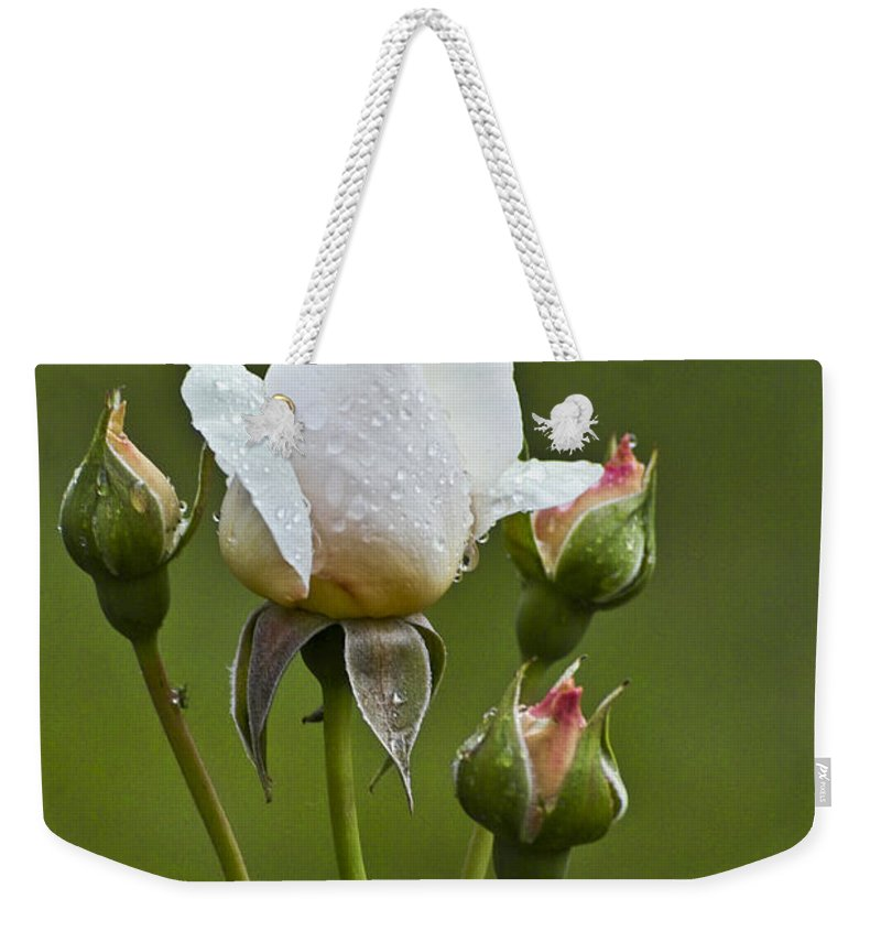 Rose Weekender Tote Bag featuring the photograph Rose Flower Series 6 by Heiko Koehrer-Wagner