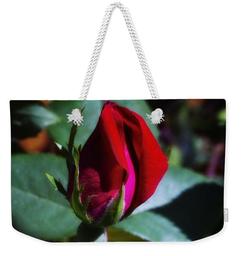Rose Bush Weekender Tote Bag featuring the photograph Rose by Linda Tiepelman