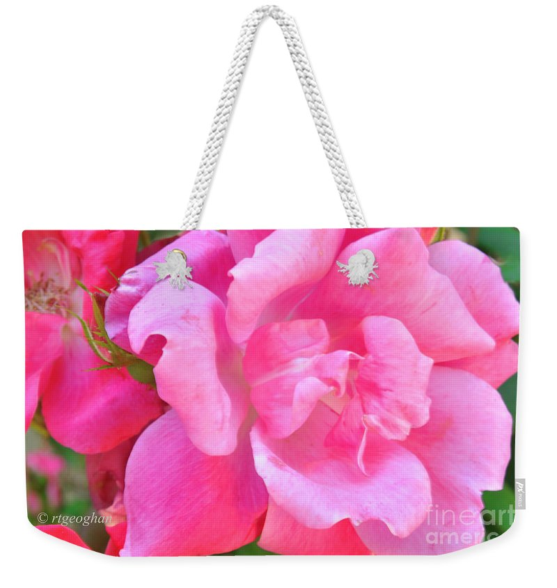 Roses Weekender Tote Bag featuring the photograph Roses Perfectly Pink by Regina Geoghan