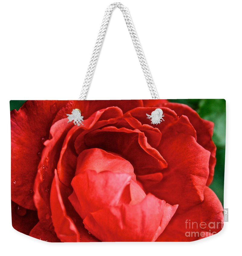 Outdoors Weekender Tote Bag featuring the photograph Rosie Red by Susan Herber