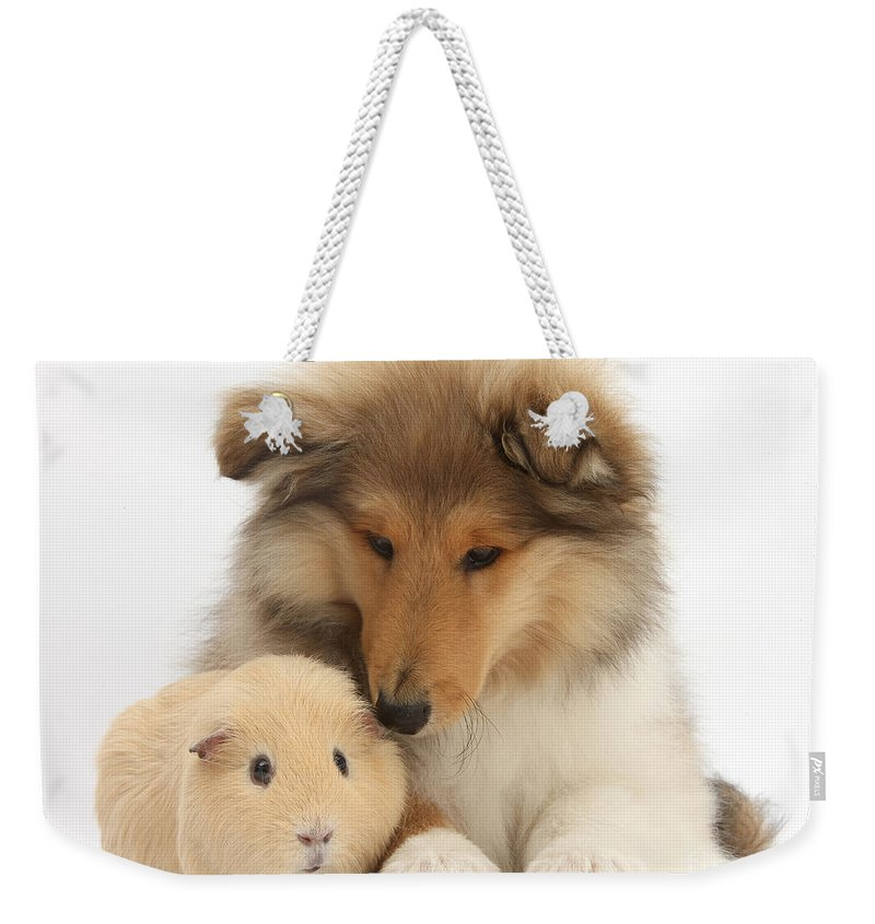Nature Weekender Tote Bag featuring the photograph Rough Collie Pup And Yellow Guinea Pig by Mark Taylor