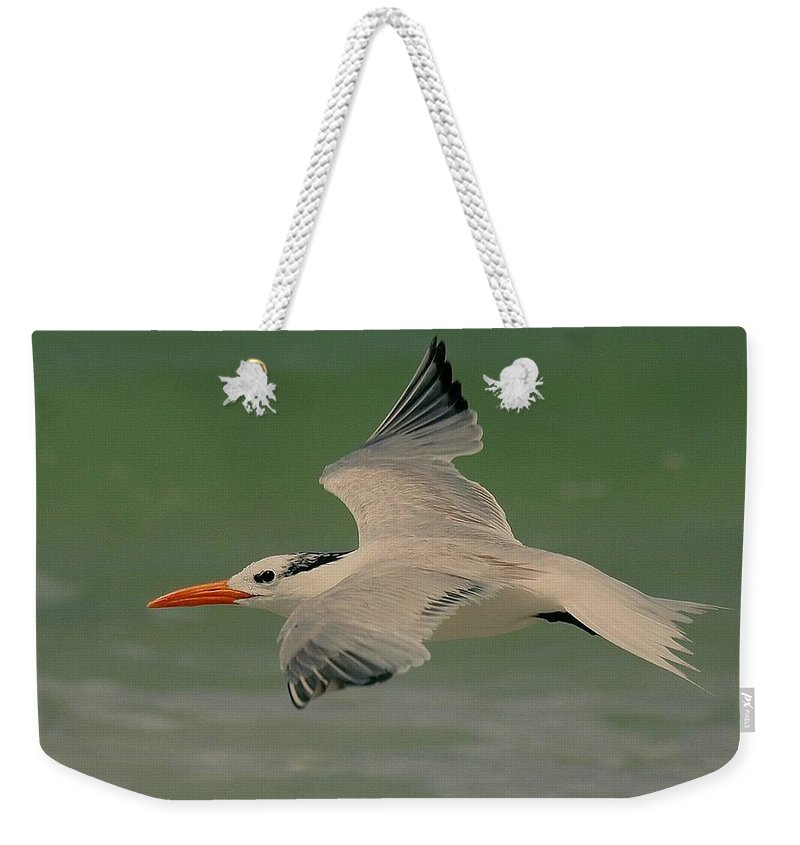 Terns Weekender Tote Bag featuring the photograph Royal Flight by Myrna Bradshaw