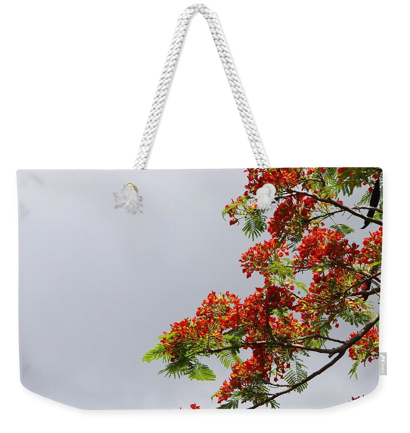 Royal Poinciana Tree Weekender Tote Bag featuring the photograph Royal Poinciana Tree by Marilyn Wilson