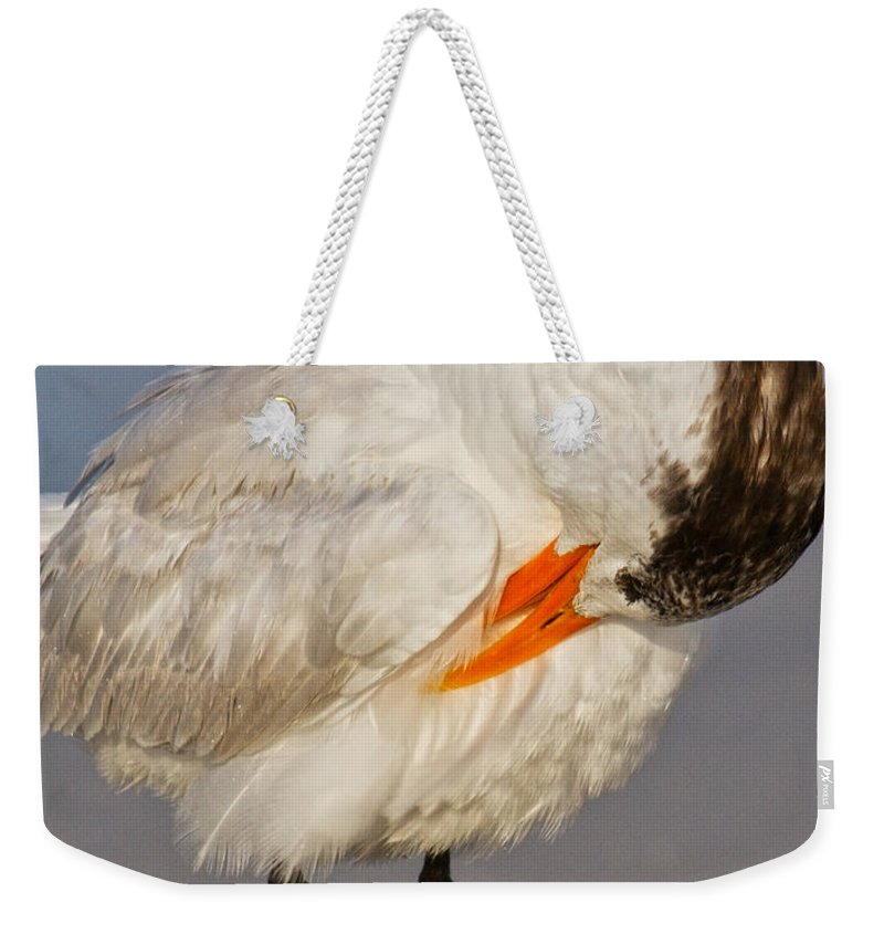 Sandwich Weekender Tote Bag featuring the photograph Royal Tern by Betsy Knapp