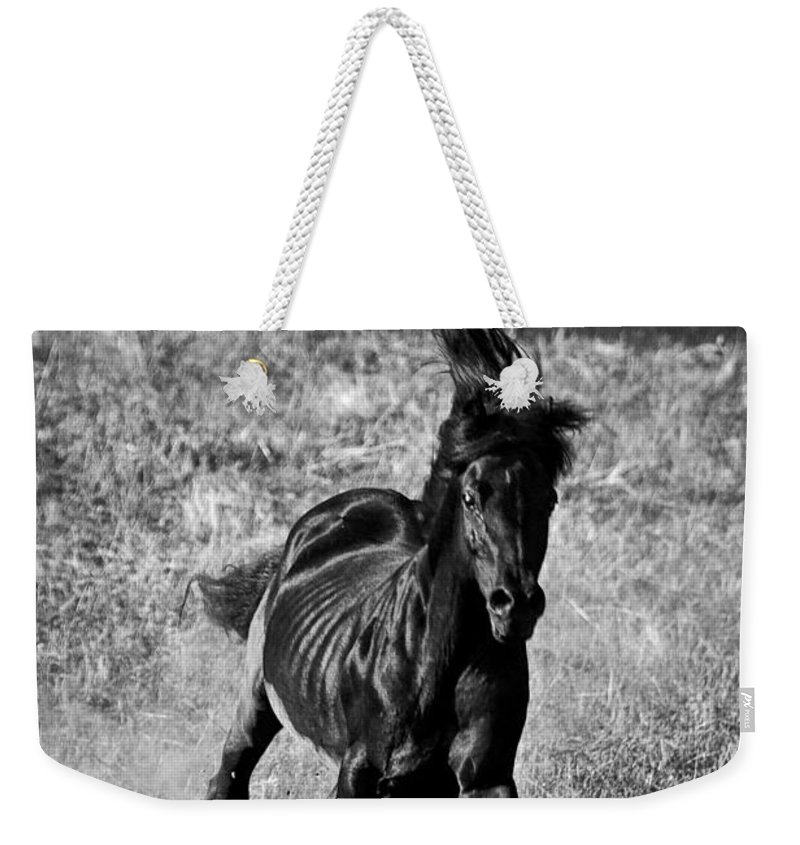 Running Free Weekender Tote Bag featuring the photograph Running Free by Wes and Dotty Weber