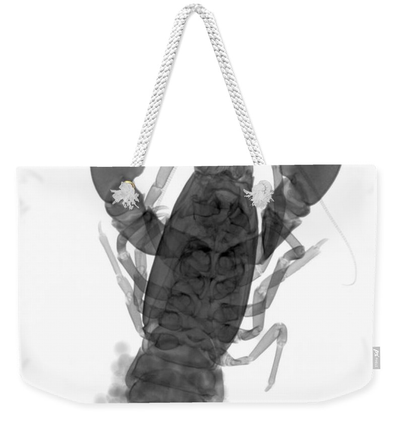 Xray Weekender Tote Bag featuring the photograph Rusty Crayfish by Ted Kinsman