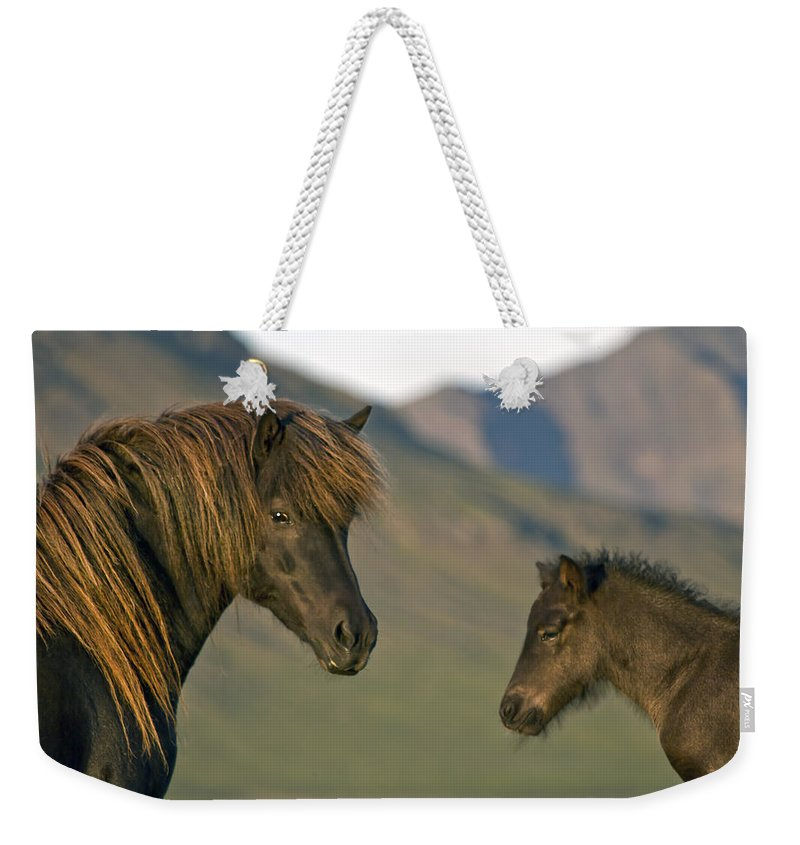 Iceland Weekender Tote Bag featuring the photograph Safe Heaven by Evelina Kremsdorf