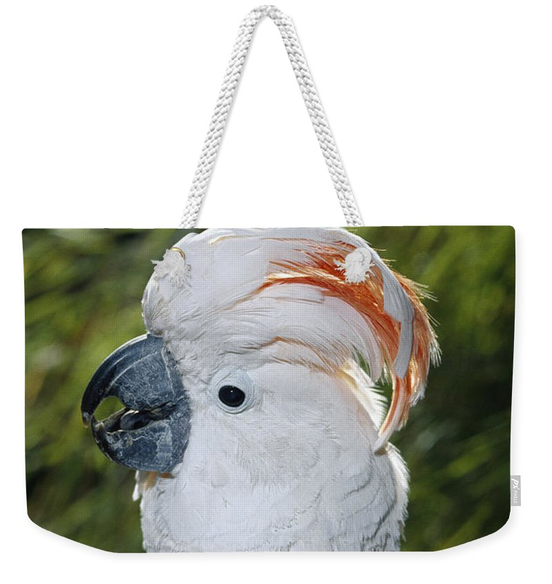 Mp Weekender Tote Bag featuring the photograph Salmon-crested Cockatoo Cacatua by San Diego Zoo