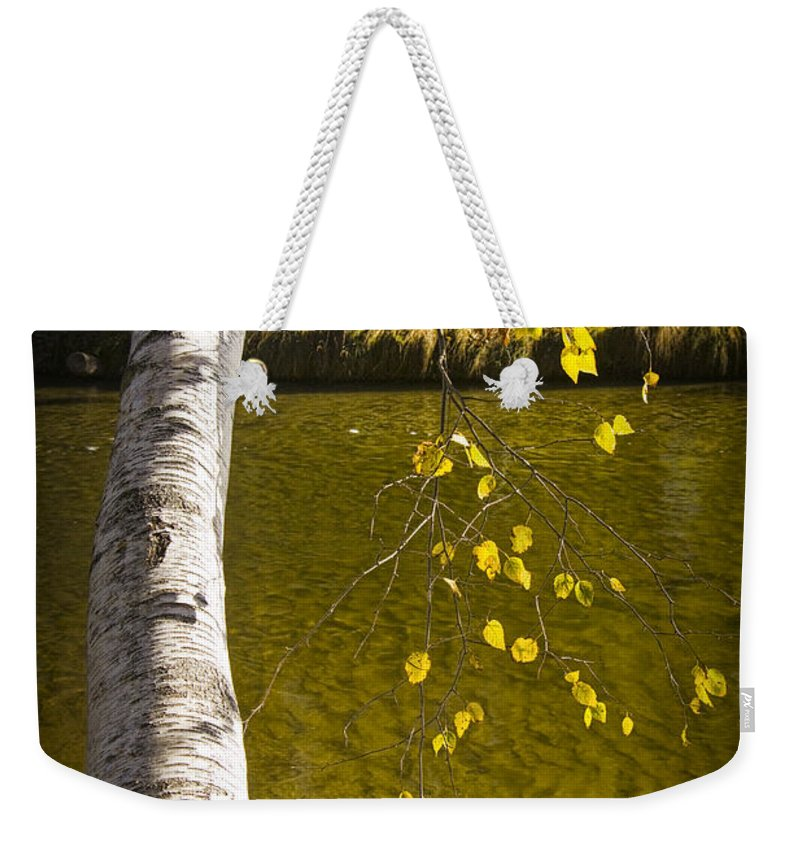 Art Weekender Tote Bag featuring the photograph Salmon During The Fall Migration In The Little Manistee River In Michigan No. 0887 by Randall Nyhof