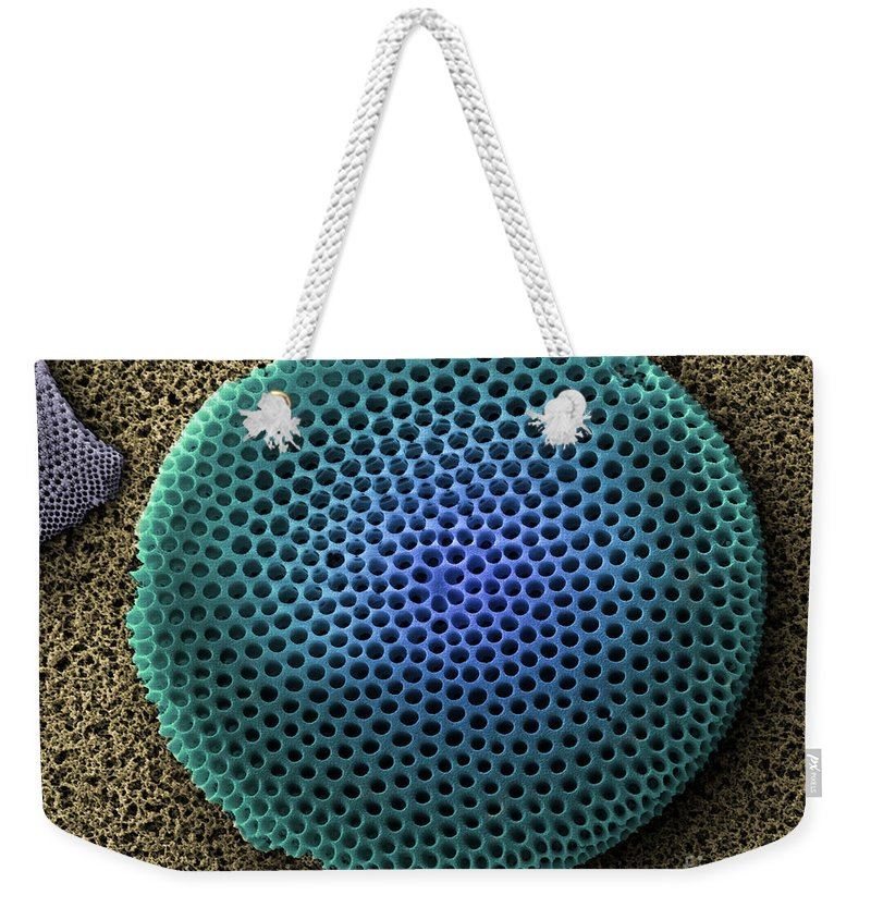 Nature Weekender Tote Bag featuring the photograph Saltwater Diatom by Ted Kinsman