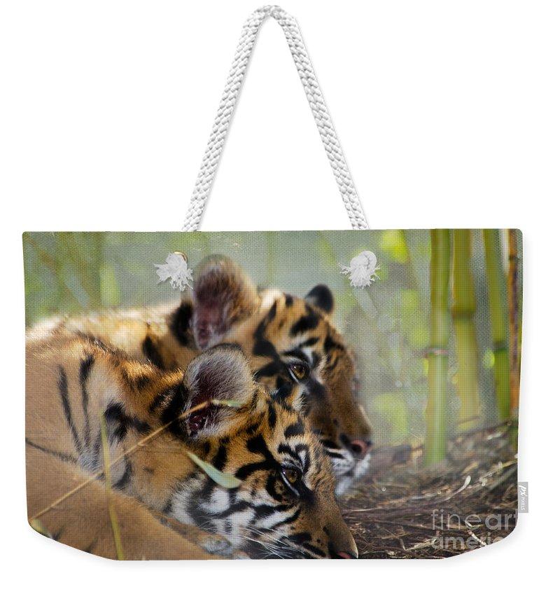Samatran Tiger Weekender Tote Bag featuring the photograph Samatran Tiger Cubs by Betty LaRue