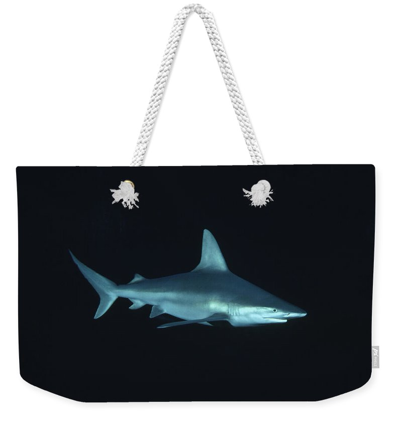 Mp Weekender Tote Bag featuring the photograph Sandbar Shark Carcharhinus Plumbeus by Flip Nicklin