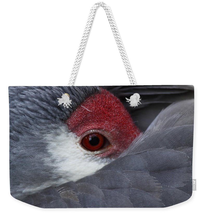 Sandhill Weekender Tote Bag featuring the photograph Sandhill Crane At Rest by Bruce J Robinson