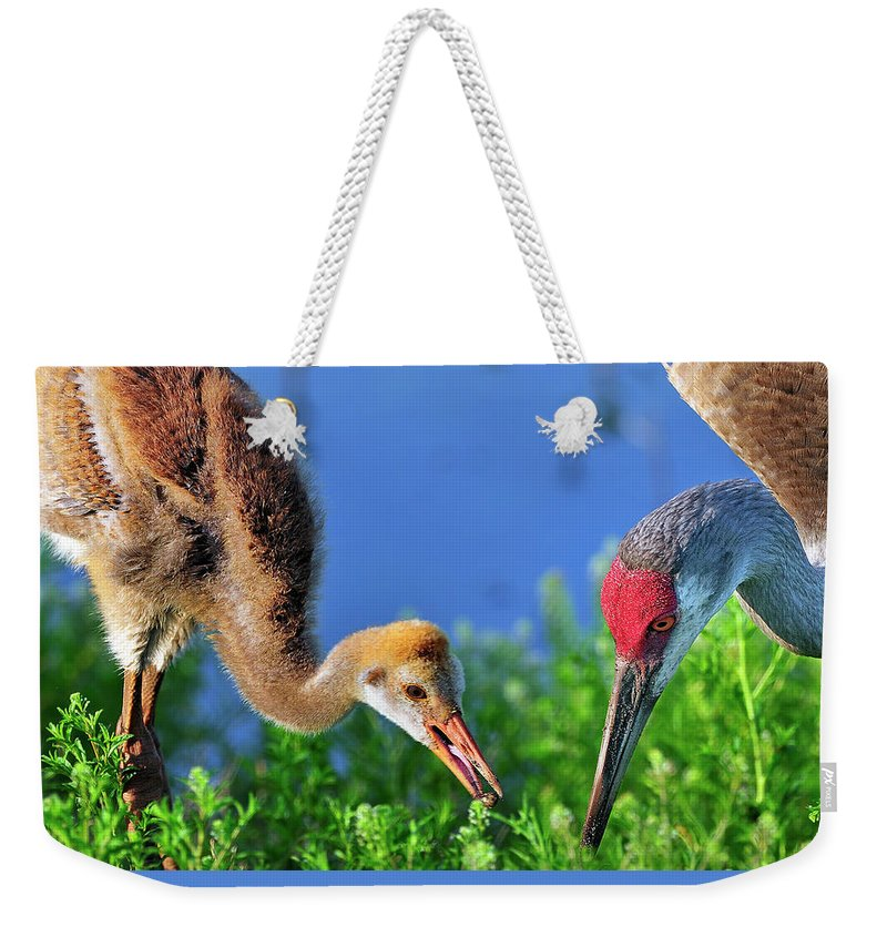 Mother Weekender Tote Bag featuring the photograph Sandhill Cranes Having Breakfast by Bill Dodsworth