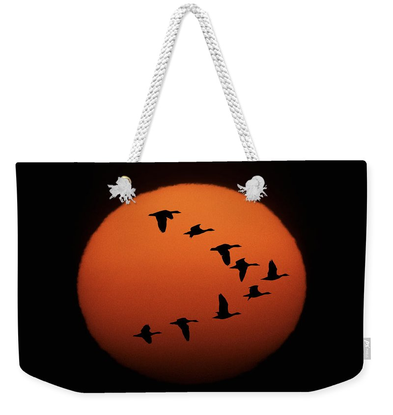 Horizontal Weekender Tote Bag featuring the photograph Sandhill Cranes Silhouetted by Michael Melford