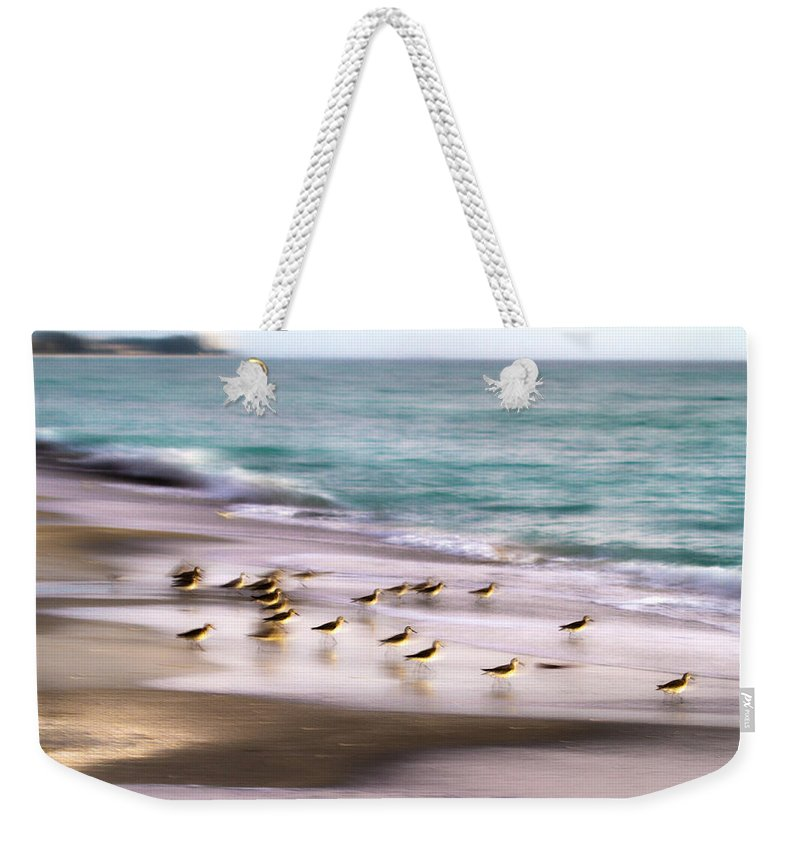 Bird Weekender Tote Bag featuring the photograph Sandpiper Evening by Betsy Knapp