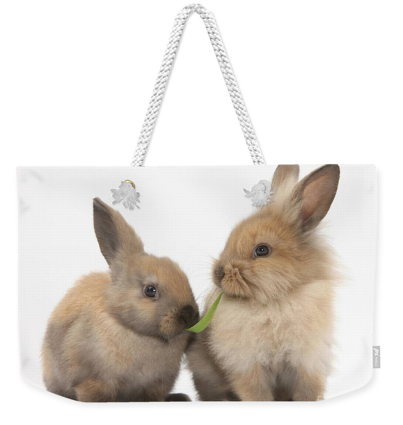 Animal Weekender Tote Bag featuring the photograph Sandy Rabbits Sharing Grass by Mark Taylor