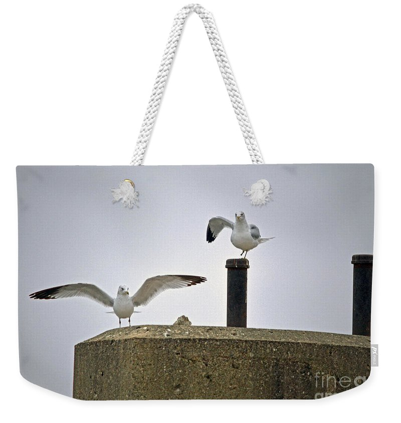 Color Photography Weekender Tote Bag featuring the photograph Say Hello Gulliver by Sue Stefanowicz