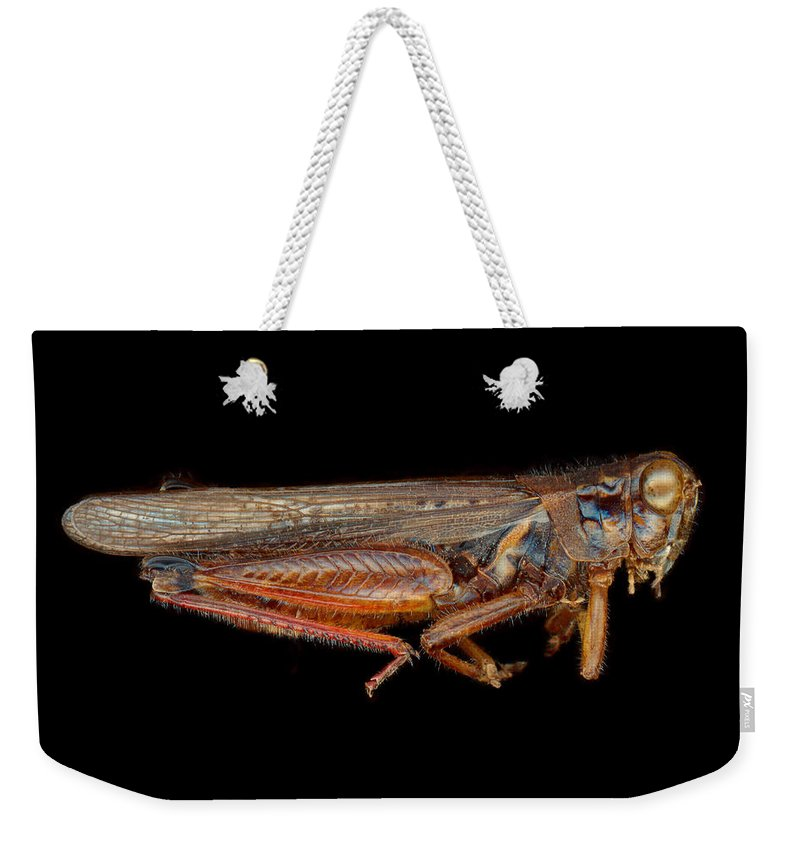 Insect Weekender Tote Bag featuring the photograph Science - Entomology - The Specimin by Mike Savad