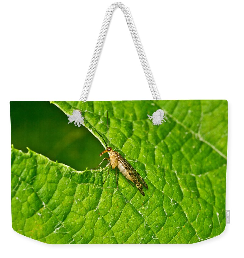 Scorpionfly Weekender Tote Bag featuring the photograph Scorpion Fly Nosing Around by Douglas Barnett