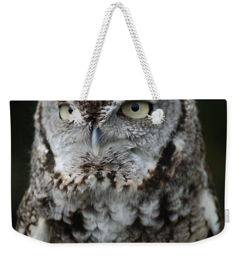 Raptor Weekender Tote Bag featuring the photograph Screech Owl by Richard Bryce and Family