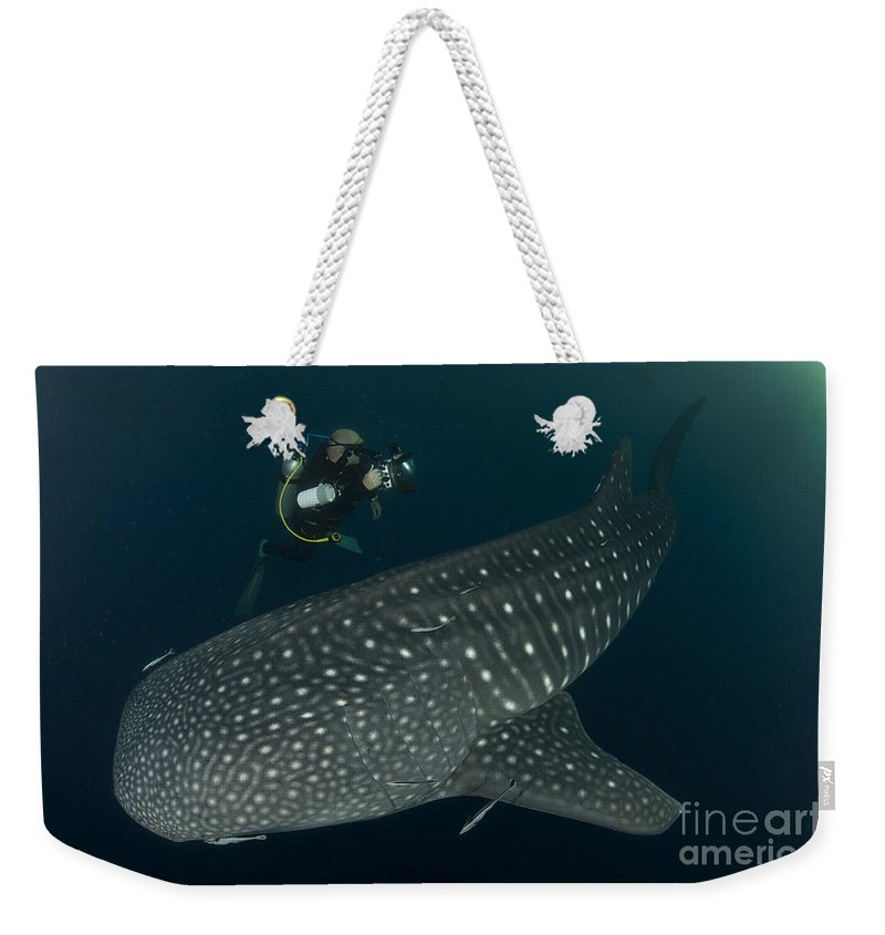 Filter Feeders Weekender Tote Bag featuring the photograph Scuba Diver And Whale Shark, Papua by Steve Jones