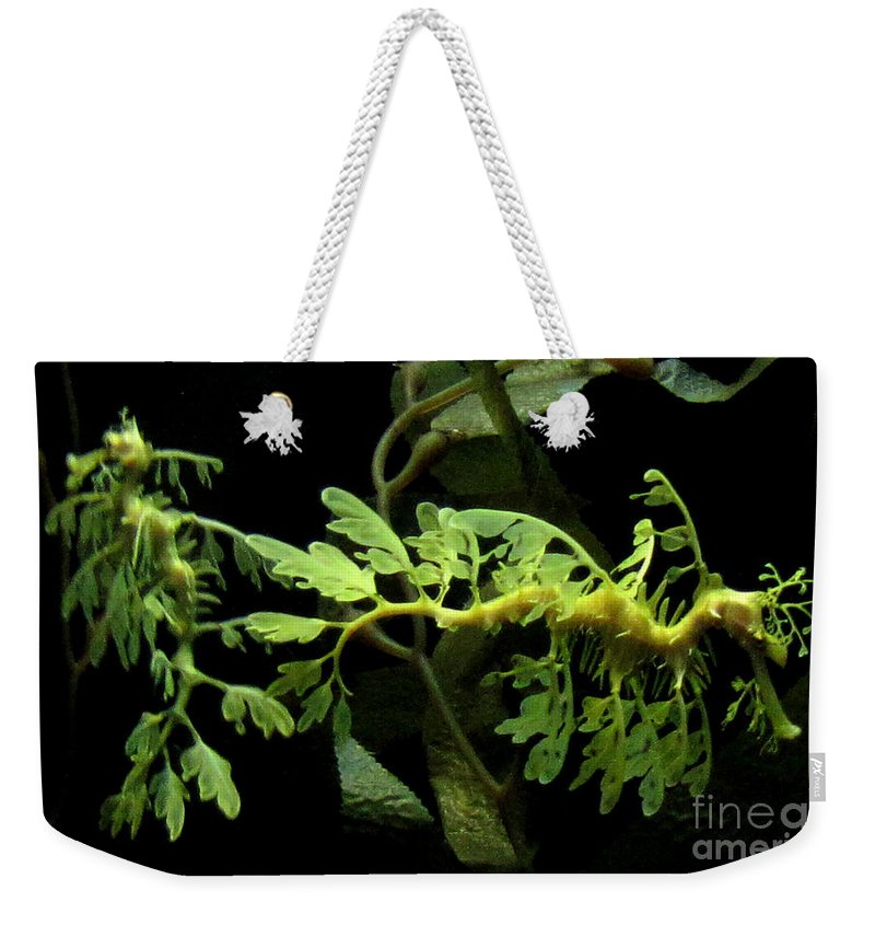 Dragon Weekender Tote Bag featuring the photograph Seadragon by Sarah Houser