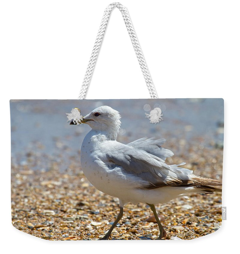 Seagull Weekender Tote Bag featuring the photograph Seagull by Betsy Knapp