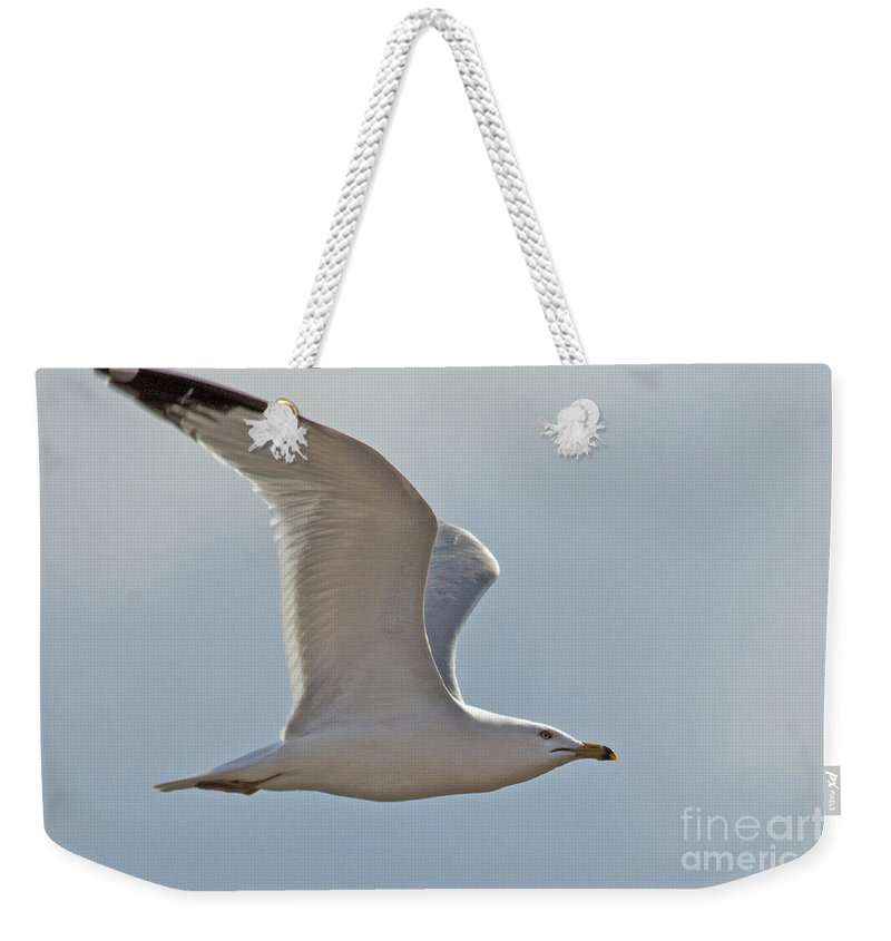 Seagull Weekender Tote Bag featuring the photograph Seagull Soaring by Darleen Stry
