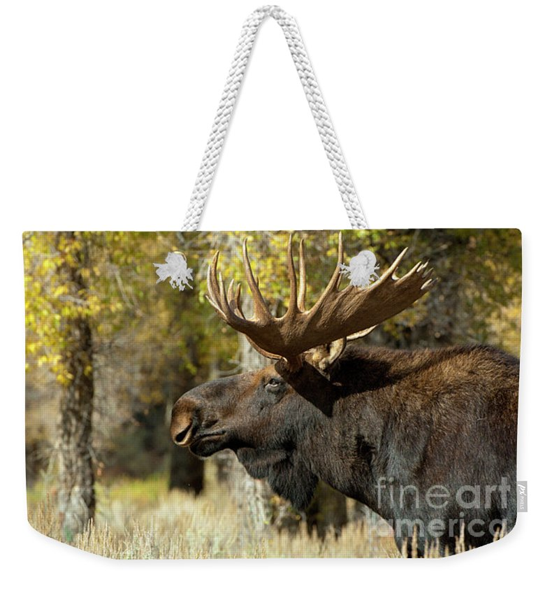 Grand Teton Weekender Tote Bag featuring the photograph Searching For The Competition by Sandra Bronstein