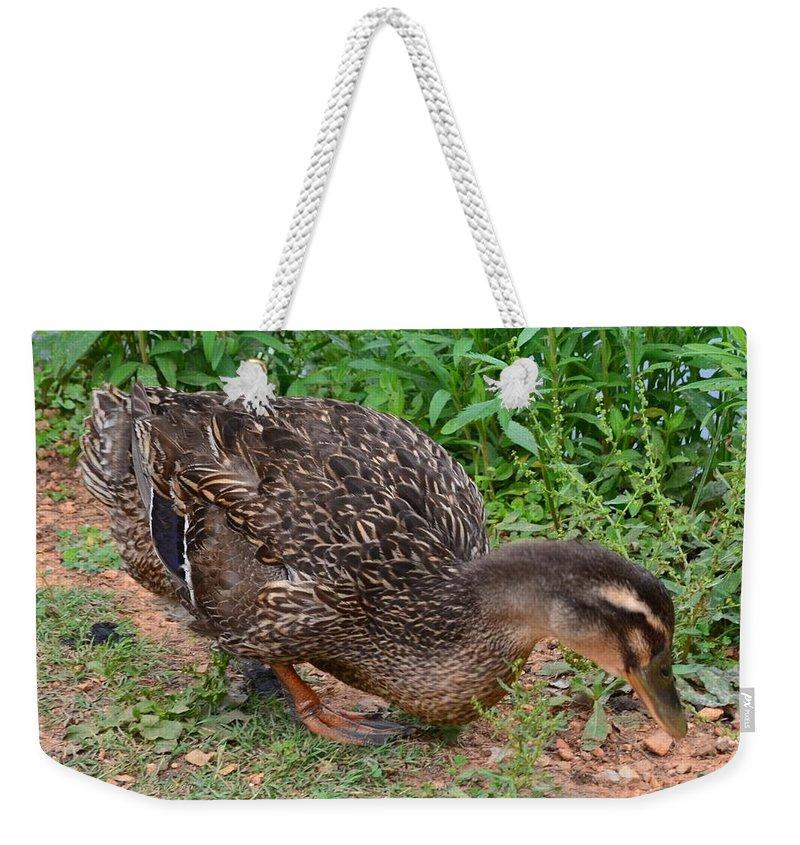 Seeking Weekender Tote Bag featuring the photograph Seeking Food by Maria Urso