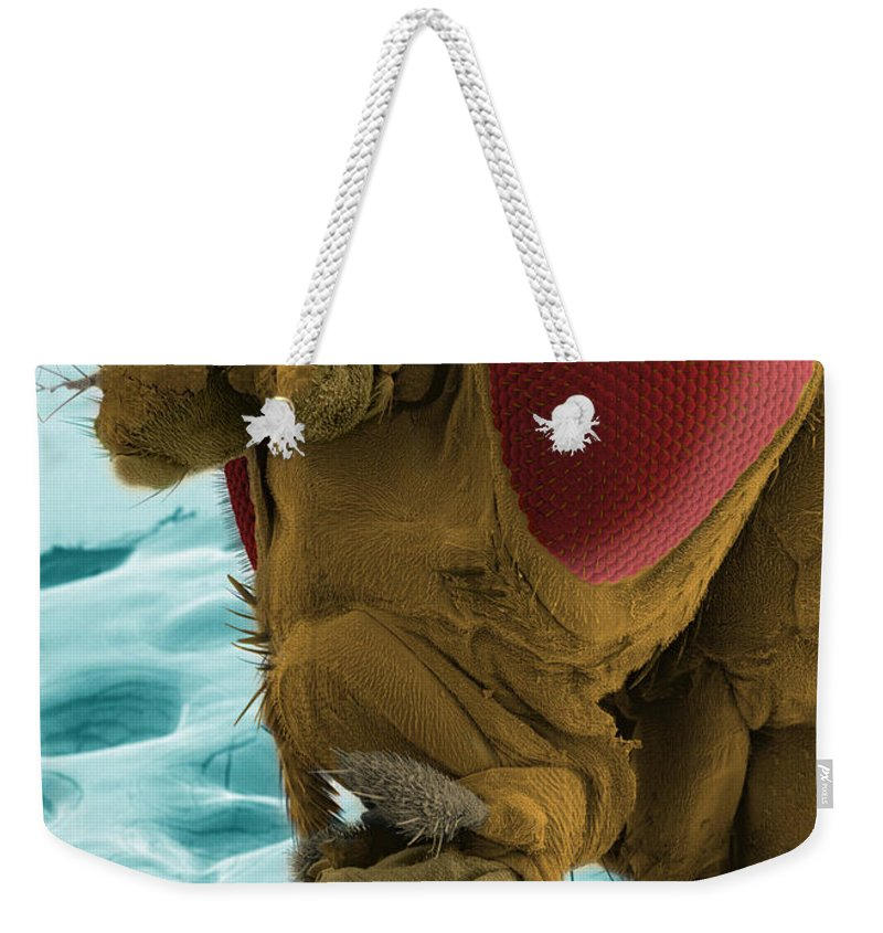 Fruit Fly Weekender Tote Bag featuring the photograph Sem Of A Mutant Fruit Fly by Ted Kinsman